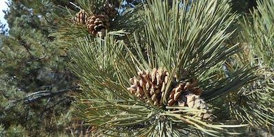 Trees for Landscaping - Friday, September 13, 2019 - CU Boulder Campus
