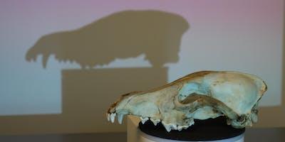 Conversations Across the Creek | Skullbook: A Digital Bone Library of Animal Skulls at the ANU