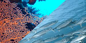 Ciguatera Fish Poisoning: Science Day