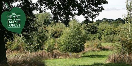 Woodland Walk: Introducing...Haydon Way Wood Walk