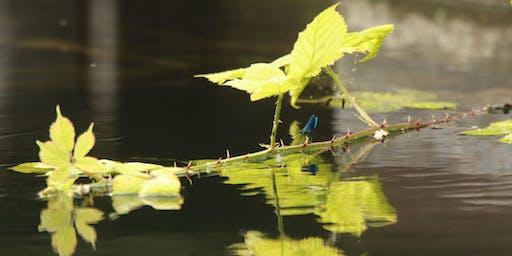 Wetlands Workshop: Water!