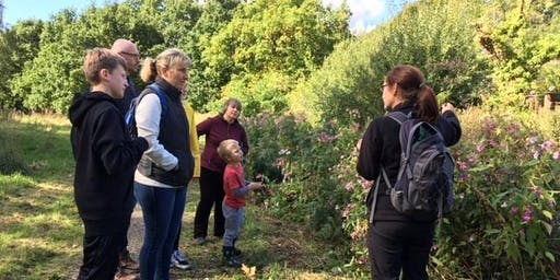 Wild Food Walkabout - Rossmill
