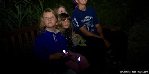 Wild night: Bat walk
