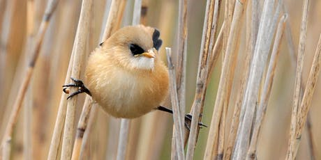Birdwatching for beginners at RSPB Minsmere tickets