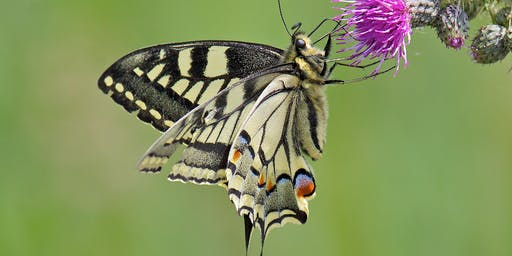 Butterflies & Moths - Identification and Conservation