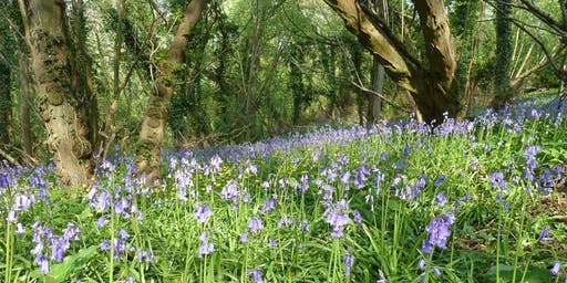 Forest Bathing at RSPB Swell Wood
