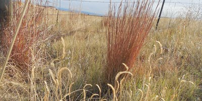 Basic Grass ID 101 - Friday, June 14 & Basic Grass ID 102 - Friday, August 23