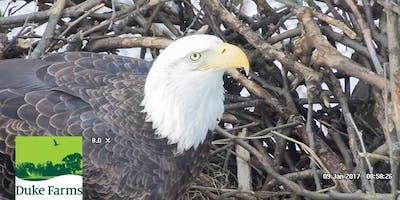 Exploring Eagles