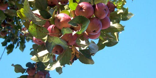 Demonstration: Caring for fruit bushes and trees