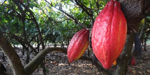 Skill Up! Kauai Event: Cacao Orchard Management