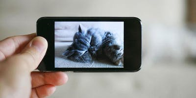 Smartphone Photography Tools, Tips and Easy Image Editing