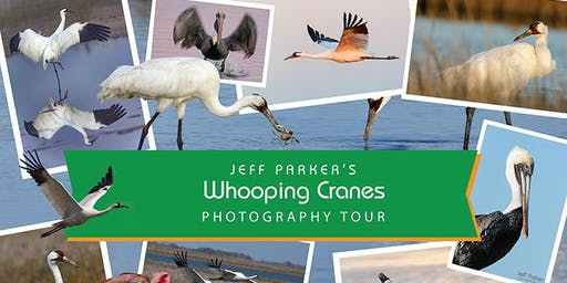 Whooping Cranes Photography Workshop