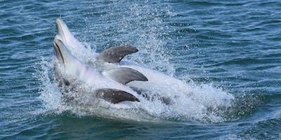 Dolphin Watch Mandurah - Training event