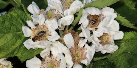 Botany for Beekeepers (Reigate) tickets