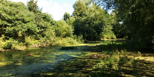 Bioblitz at Aylesford Old Pit