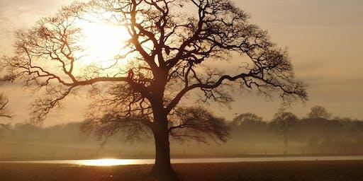 Poynton Park Tree Wander