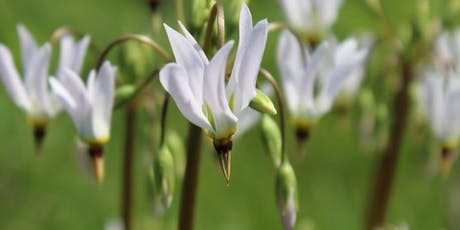 2019 Wildflower Walks at Alfred Caldwell Lily Pool, Lincoln Park  tickets