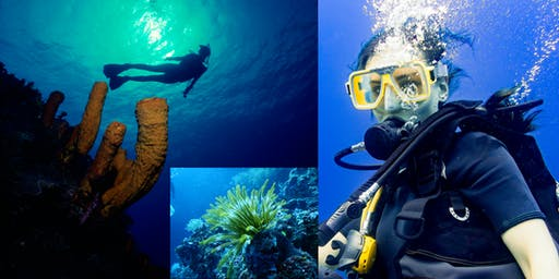 Learn to Scuba: PADI Open Water Certification