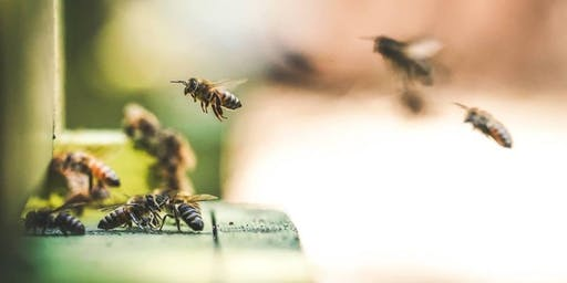Garden Smarter: Thinking About Beekeeping?