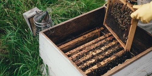 Living and Learning with Bees