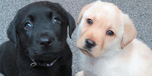 Seeing Eye Dogs Puppy Carer Info Session: Kensington Nov 14