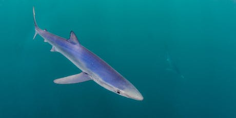 Seaquest Lecture - The blue shark in Cornwall  tickets