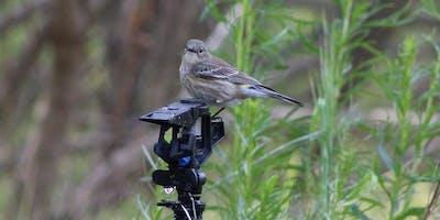 Bird Walk - Mason Regional Park