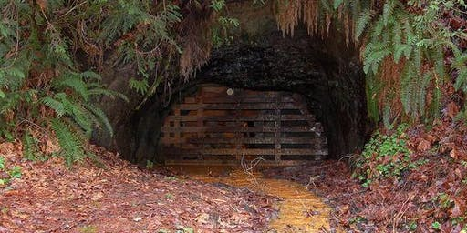 Historic Tiger Mountain Mine Hike