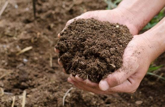 How to Build Great Soil for Your Garden
