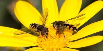 Autumn Community Wild Pollinator Count