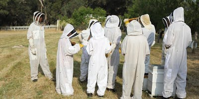 Introductory Beekeeping Course, Perth