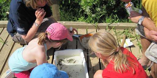 Pond Dipping - Haysden August 20th