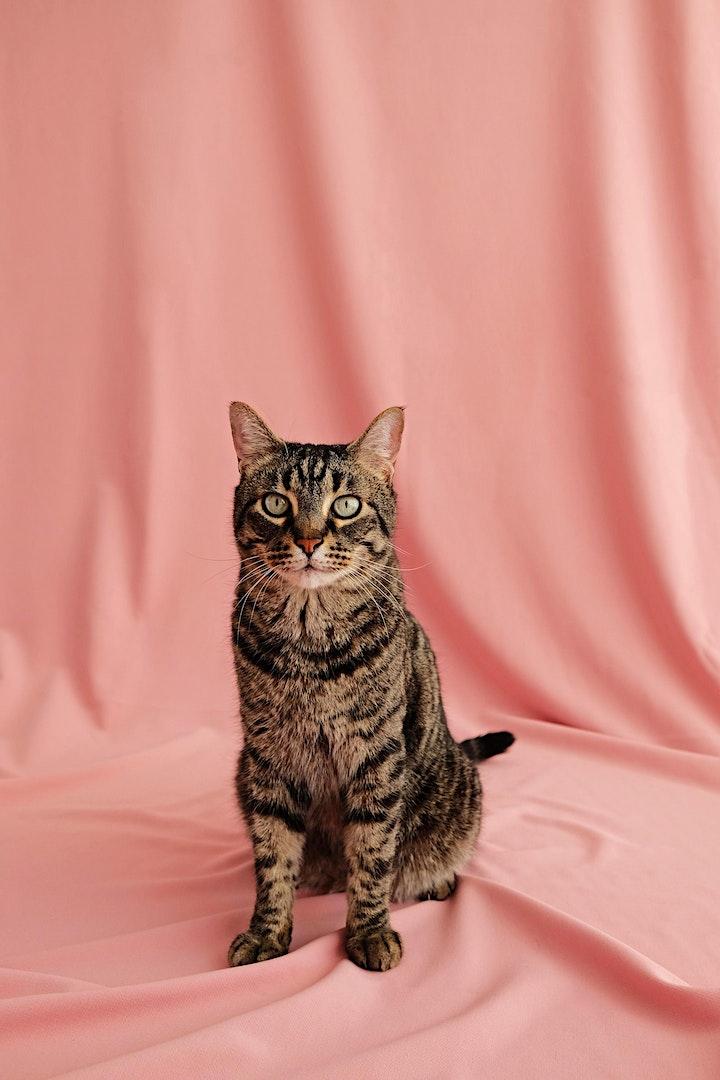 Imagen de CAT'S  DAY  SHOOTING