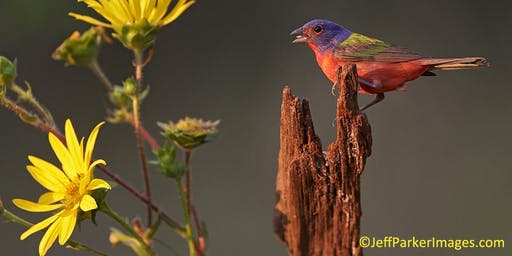 Painted Bunting Photography Workshop in Central Texas