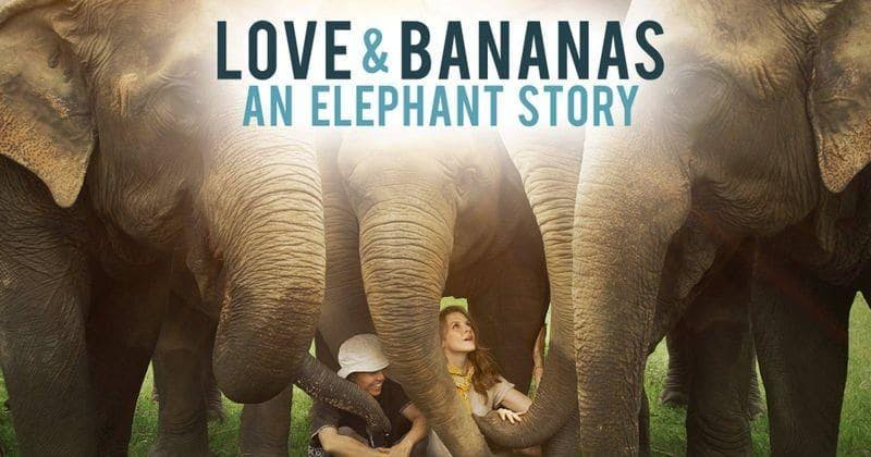 Love and Bananas, an elephant story