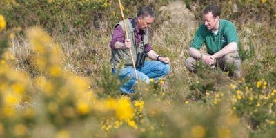 Heathland Habitats for Wildlife and How to Manage them for Birds