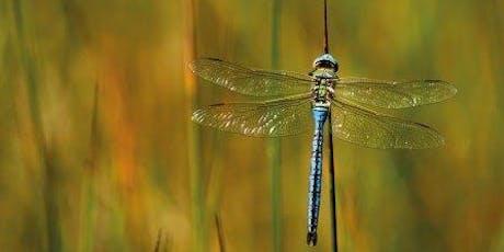 Dragonflies & Damselflies - Ecology & ID tickets