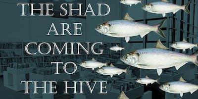 "Design a ""Shad"" fish"