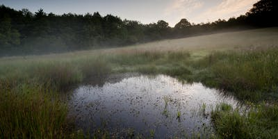 Surrey's Wooded Pastures