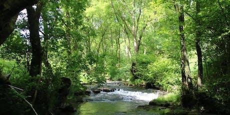 Experience Shinrin-yoku at Nant-y-Bedd Forest Garden tickets