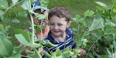 Heritage Tomato & Pepper Seeding Workshop- Parks Shop