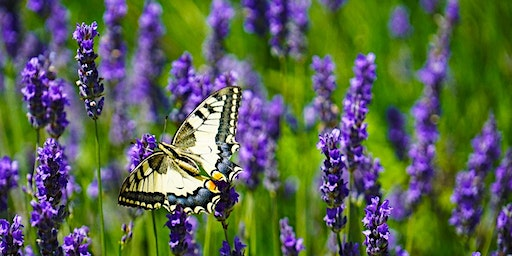 Getting Started with Essential Oils - Chelmsford