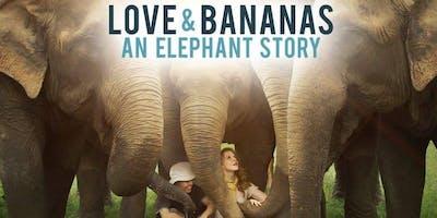 Love and Bananas, an elephant story