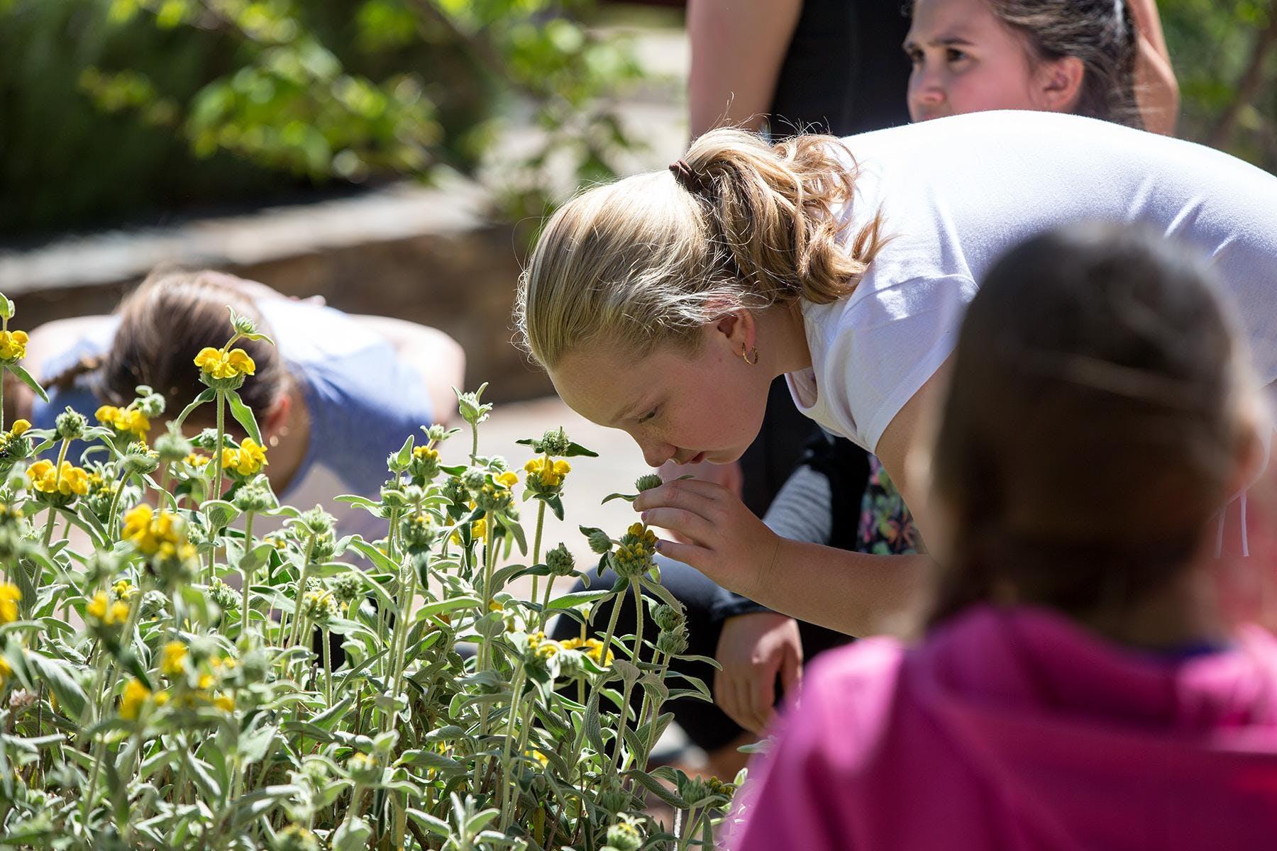 Senses and Sensibility for Kids: plants and V