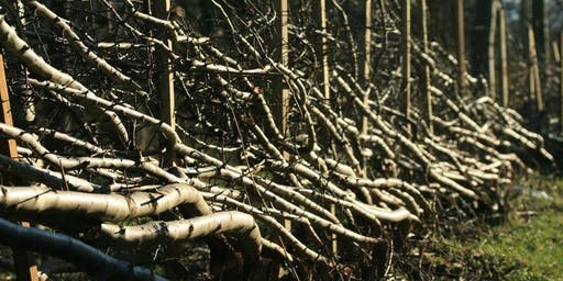 Hedgelaying for Beginners