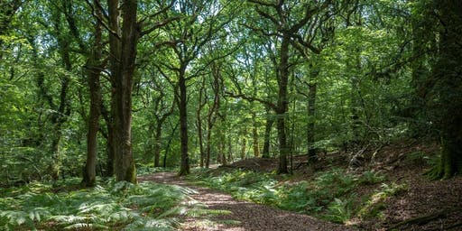 Forest Bathing at RSPB Arne