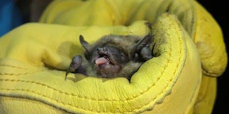 Bats of New Jersey tickets