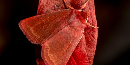 Moths as Bioindicators