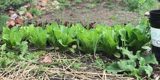 Free Gardening Classes