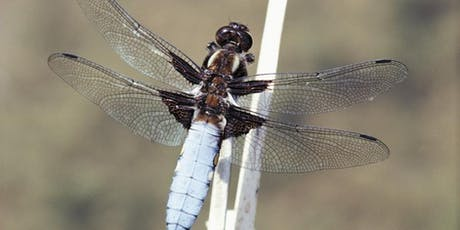 Discovering Dragonflies and Damselflies at RSPB Strumpshaw Fen tickets